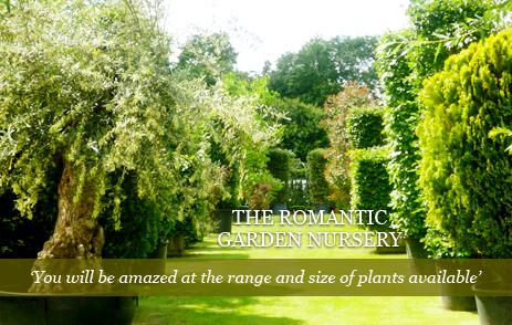 The Romantic Garden Nursery